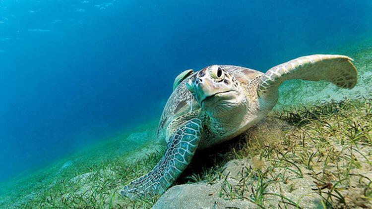 Caretta Tuba'nın peşinde... Kıyı kıyı, ada ada Akdeniz ülkeleri