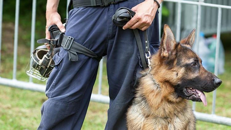 ABD ordusunda yeni dönem... Görevli köpeklerde artırılmış gerçeklik teknolojisi deneniyor