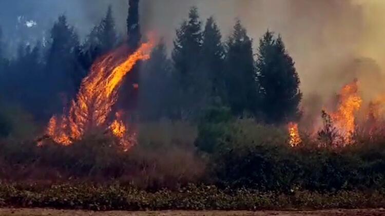 Son dakika haberi: Kahramanmaraş'ta 4 ayrı noktada yangın