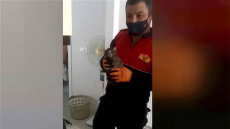 Apartman bacasına düşen yavru kediyi itfaiye kurtardı