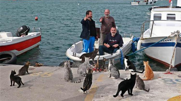Balıkçılar, av dönüşü kıyıda bekleyen kedileri besledi