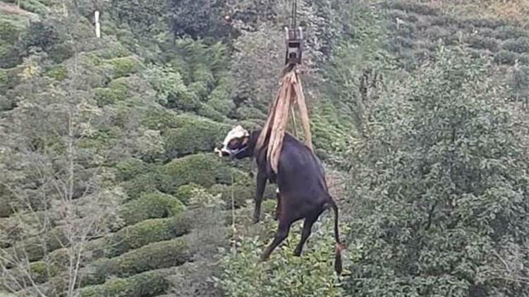 Düştüğü çay bahçesinde mahsur kalan boğa, vinçle kurtarıldı
