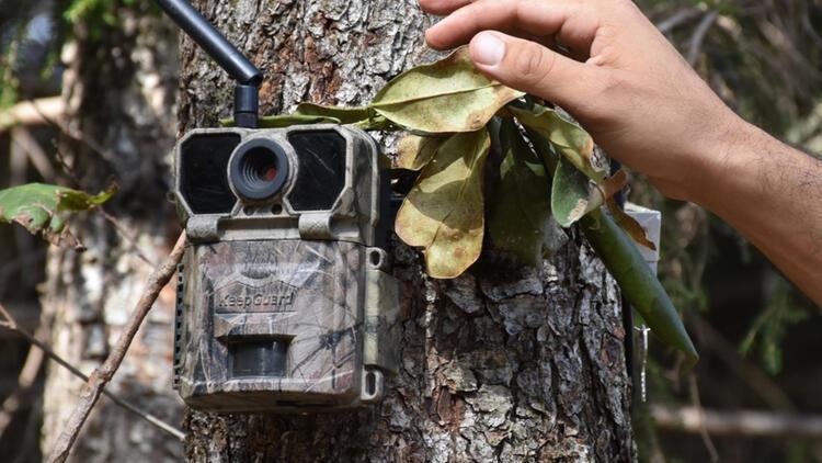 Trabzon'da ormanları fotokapanlar koruyacak