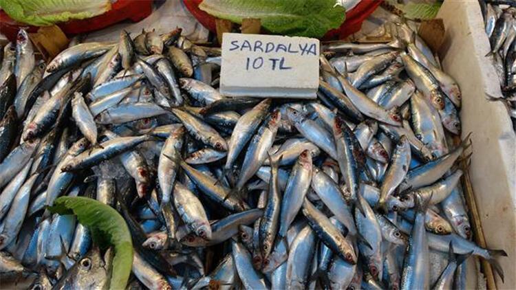Akdeniz'de sardalya bolluğu