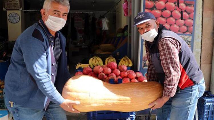 Kayseri'de 36 kilo ağırlığındaki kabak dikkat çekiyor