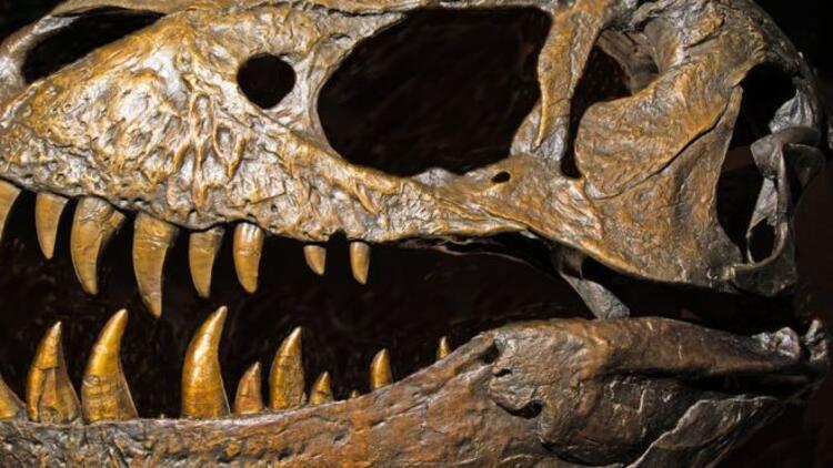 12 yaşındaki çocuk 69 milyon yıllık dinozor fosili buldu