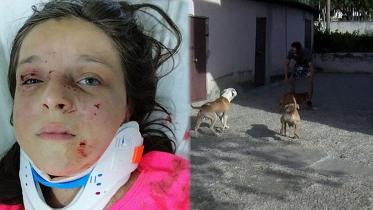 Tuğba'nın saldırıya uğradığı mahallede pitbull korkusu sürüyor