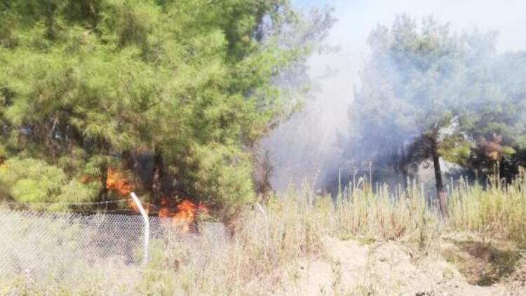Son dakika... İskenderun'da orman yangını