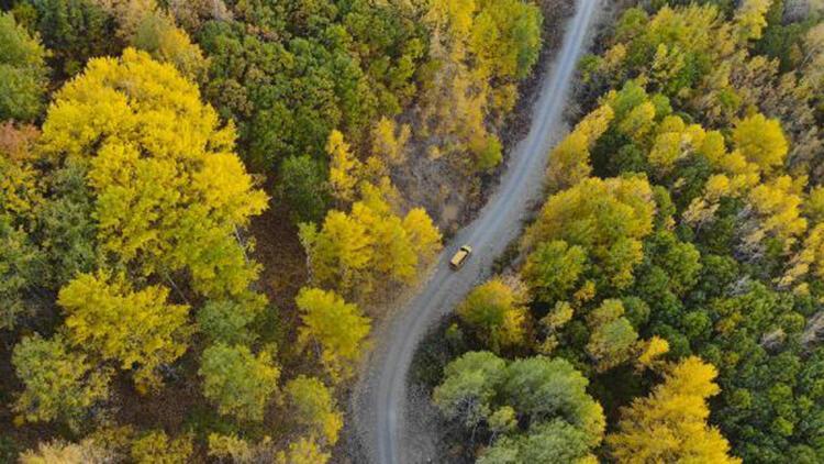 Sonbaharda Salördek Ormanları'nda renk cümbüşü