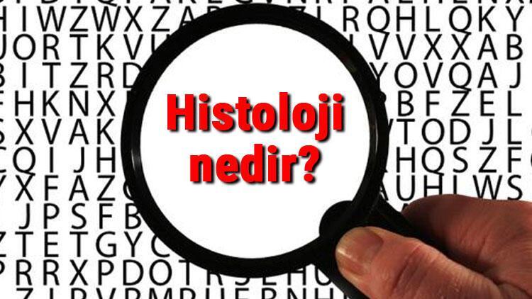 Histoloji nedir Histolog ne demek Histoloji bilimi neler ile ilgilenir