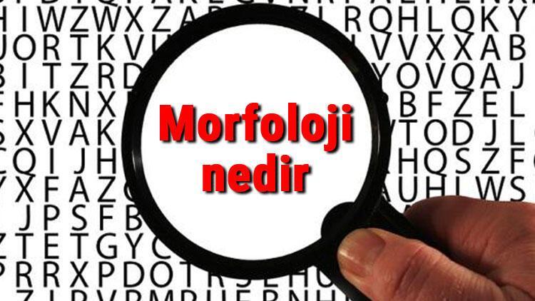 Morfoloji nedir ve neyi inceler? Morfoloji hakkında kısaca bilgiler