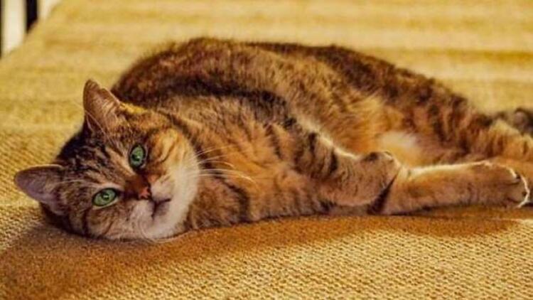 Ayasofya'nın meşhur kedisi Gli yaşamını yitirdi
