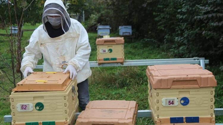 Arı kovanları da 'akıl'landı: Hırsızlığı bitirecek