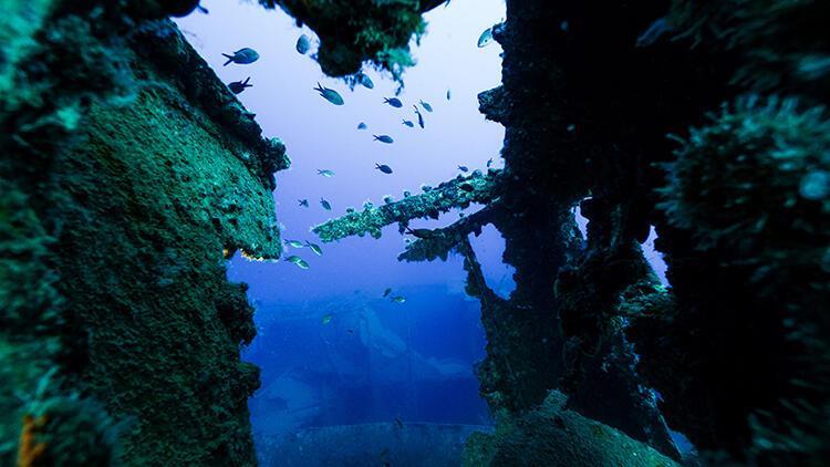 Antalya'da hayalet ağlardan temizlenen Saint Didier batığı, balıklara yuva oldu
