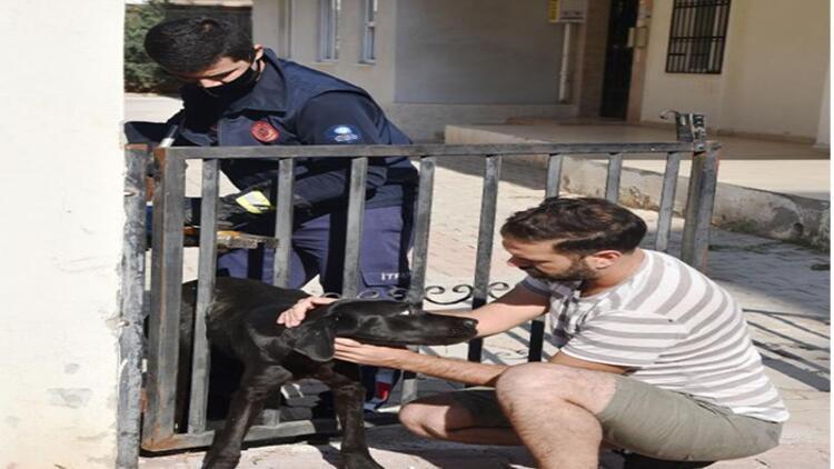 Parmaklığa sıkışan köpek kurtarılınca minik Yağız sevinçten zıpladı