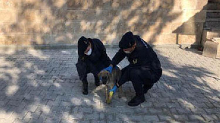 Jandarmadan bacağı kırılan sokak köpeğine yardım