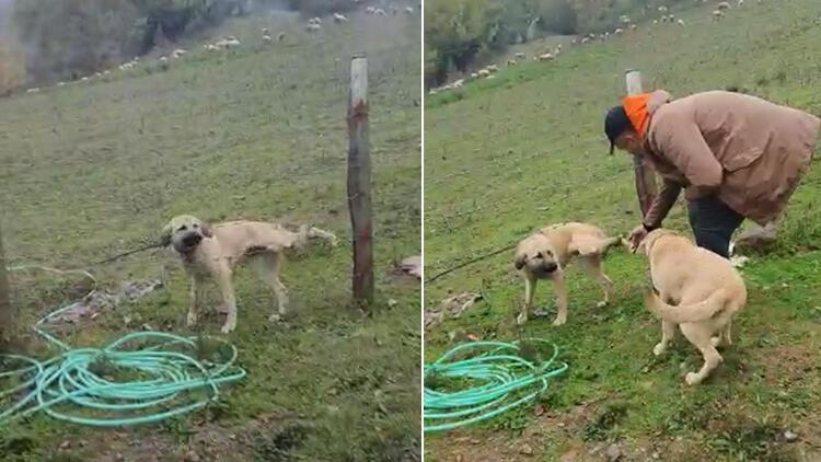 Bartın'da bacağı tele takılan köpeği kurtardı