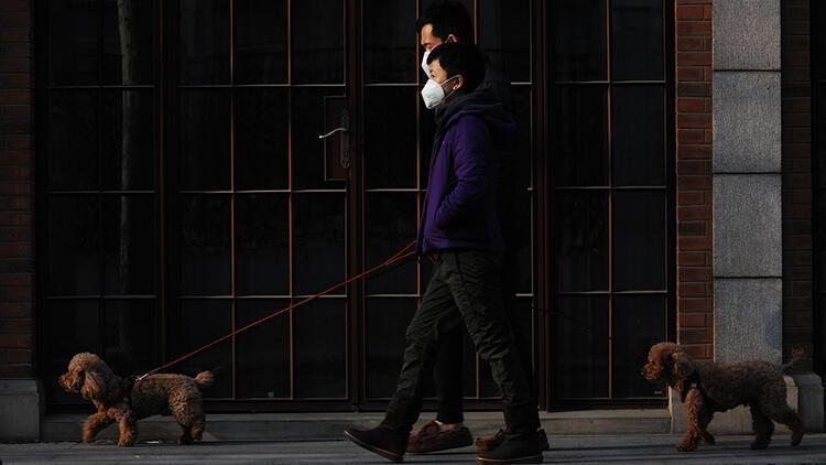 Çin kasabasında köpek gezdirme yasağı: Üç kez ihlal edenlerin köpeği öldürülecek