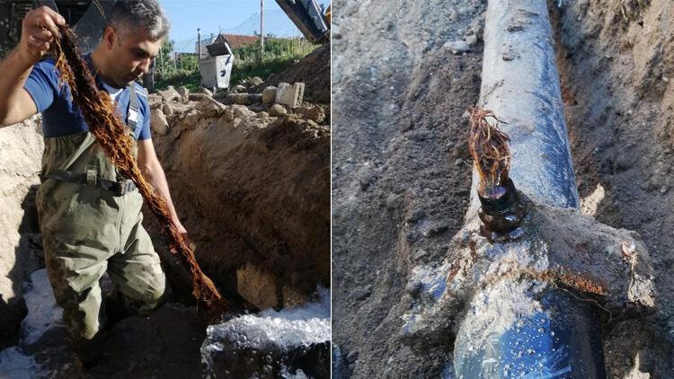 Suların az akmasının nedeni belli oldu! İçme suyu hattından 5 metrelik kunduz çıktı