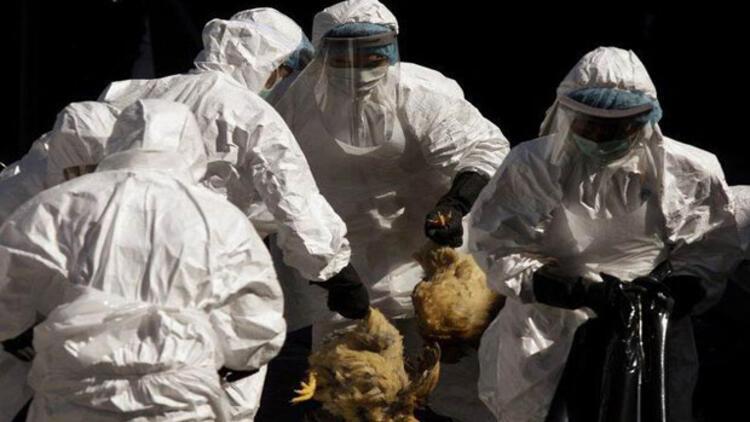 Güney Kore'de kuş gribi alarmı! Binlerce hayvan itlaf edildi