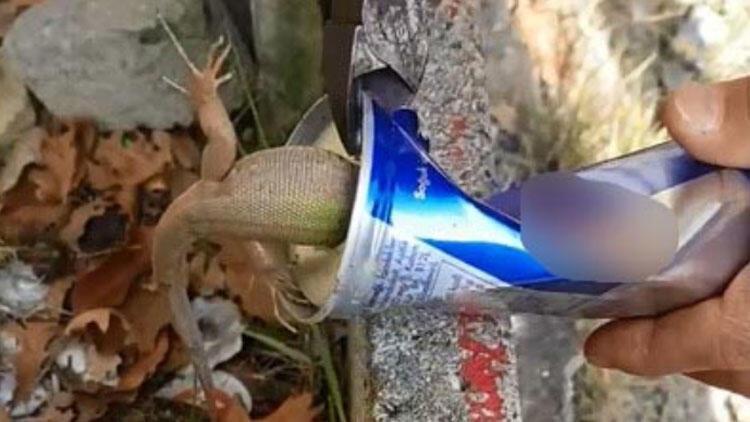 İçecek kutusuna sıkışan kertenkeleyi penseyle kurtardı