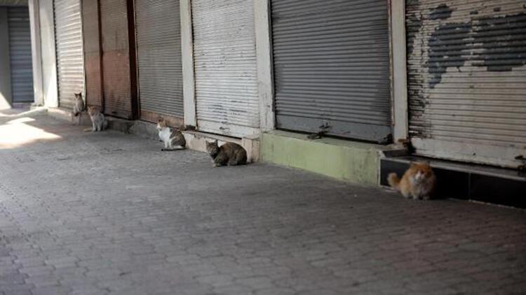Hatay'ın tarihi Uzun Çarşı ile meydanları sokak hayvanlarına kaldı
