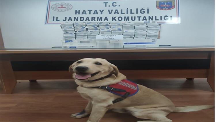 Antakya'da 950 paket kaçak sigara ele geçirildi