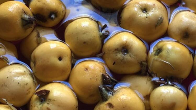 Antioksidan ve şifa deposu alıç meyvesi