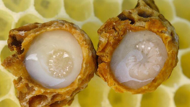 Arı sütü nedir? Arı sütünün faydaları nelerdir? Arı sütü hangi hastalıklara iyi gelir?