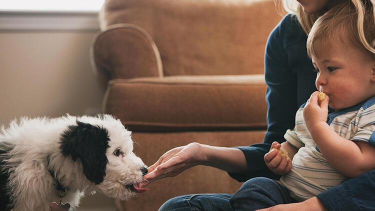 Apartman sakinleriyle evcil hayvan besleyenler arasında yaşanan uyuşmazlıklar