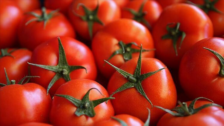 Türkiye'nin domates ihracatı geçen yıl yükseldi