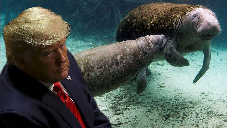 Deniz hayvanının üzerine 'Trump' yazılması tepki topladı! Yazan kişi aranıyor
