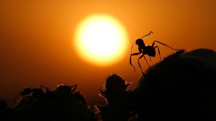 Böcek türleri yok oluyor! Korkutan açıklama