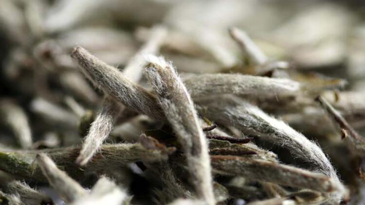 Virüs ve bakterilere karşı etkisi çok kuvvetli... Beyaz çayın faydaları neler?