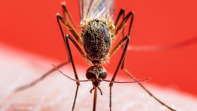 İstanbul'da kışın bile sivrisinek görülür oldu! 'Sıcaklıklar düşmediği sürece...'