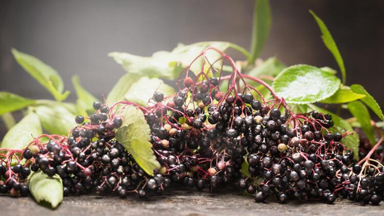 Pandemide Bitkilere Rağbet Arttı! Bağışıklığınızı Güçlendirmek İsterken Zarar Görmeyin