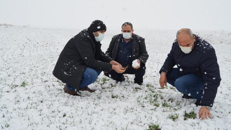 Kar yağışıyla yüzü gülen çiftçi: Emeklerimiz 'beyaz altın' ile buluştu