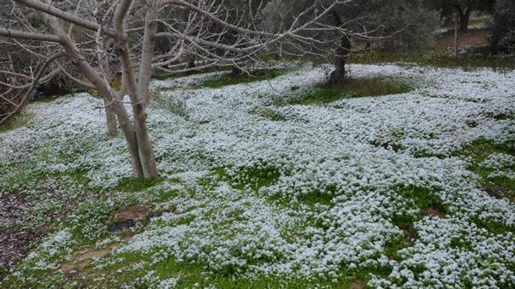Kuşadası'na 6 yıl sonra kar yağdı