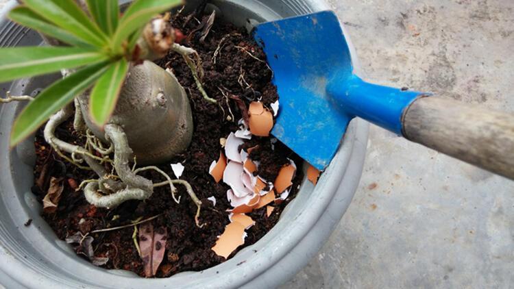 Bitkilerinizi hayata döndürecek harika püf noktaları