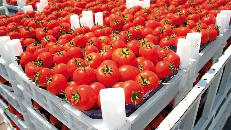 Rusya domateste kotayı 50 bin ton arttırdı
