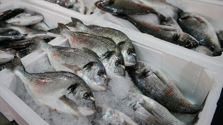 Muğla'dan 78 ülkeye balık ihraç edildi