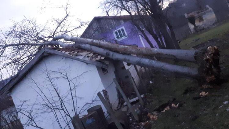 Fırtınanın devirdiği ağaç, ahırın üzerine düştü