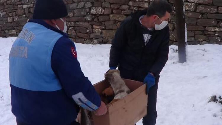 Donmak üzereyken bulunan köpek ve 6 yavrusu kurtarıldı