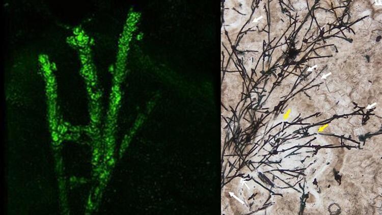 Heyecanlandıran keşif! Çin'de 635 milyon yıllık mikrofosil bulundu