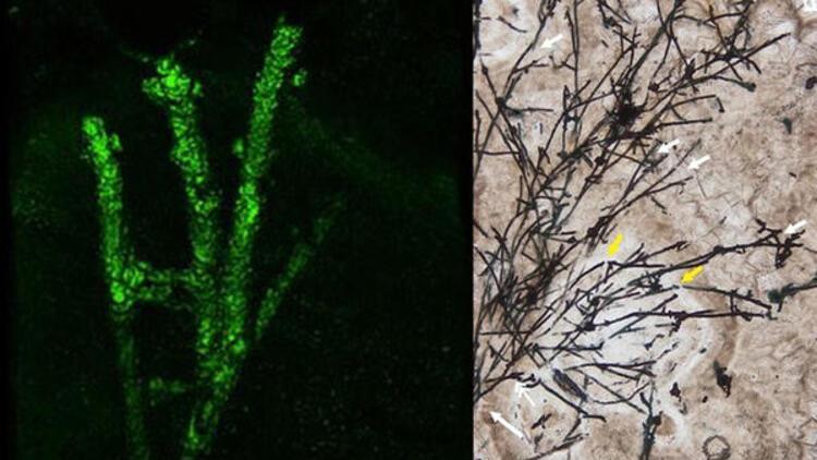 Çin sınırlarında 635 milyon yıllık mikrofosil bulundu