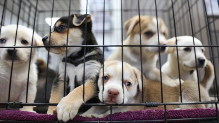 Türkiye'de hayvan hakları: Yeni yasa teklifi neleri kapsıyor