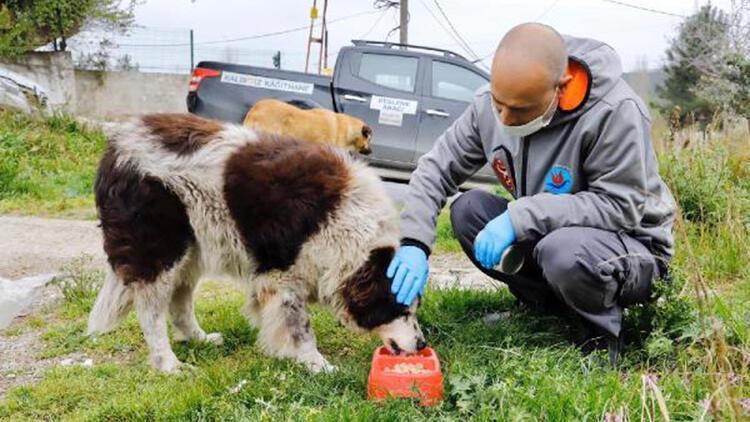 Kağıthane'de 7 bin 392 sokak hayvanının tedavi ve muayenesi yapıldı
