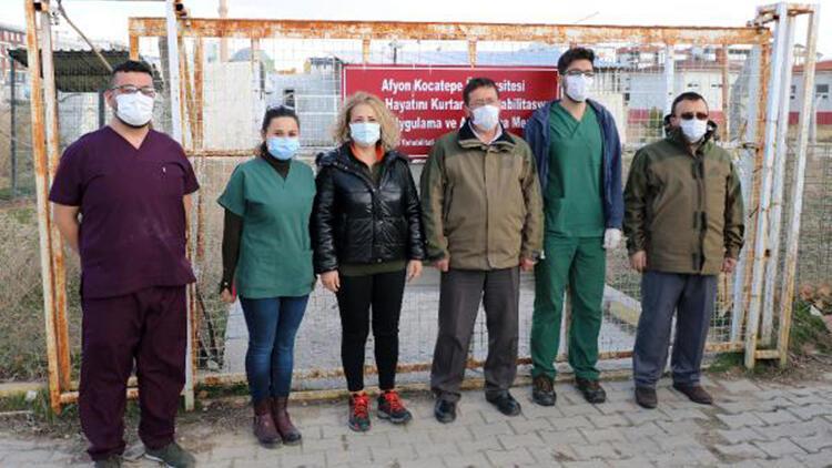 Afyonkarahisar'da tedavisi tamamlanan bayağı şahin ve kızıl tilki doğaya salındı