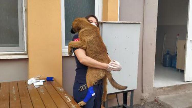 Yaralı sokak köpeğine sağlıkçılar sahip çıktı