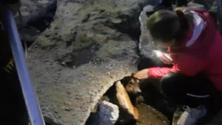 Beton bloğun altında sıkışan köpeği itfaiye kurtardı
